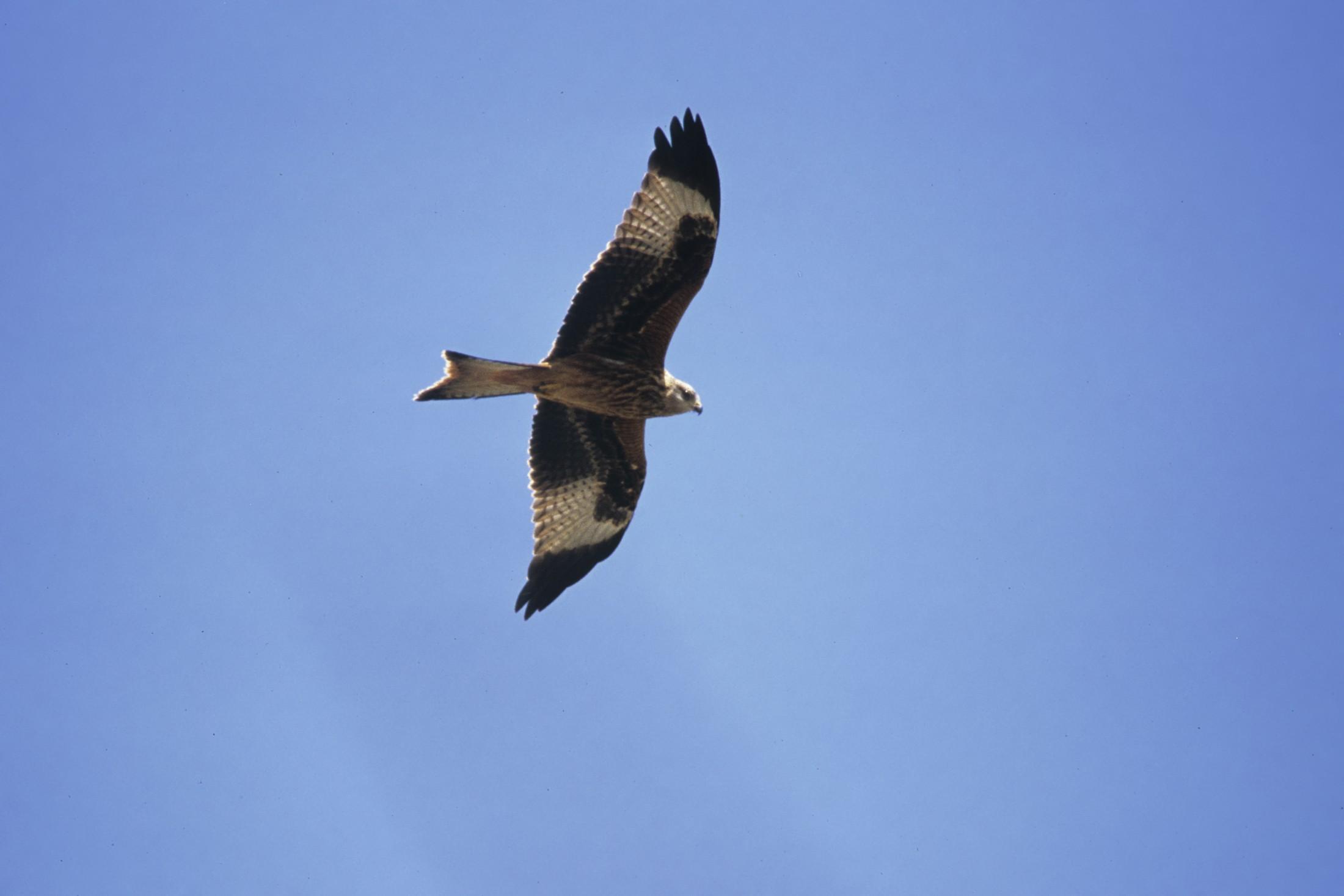 BirdLife Vogelexkursion