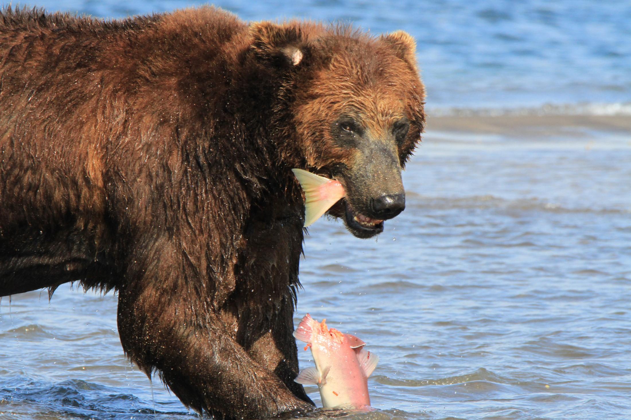 Kamtschatka – Land der Bären und Vulkane