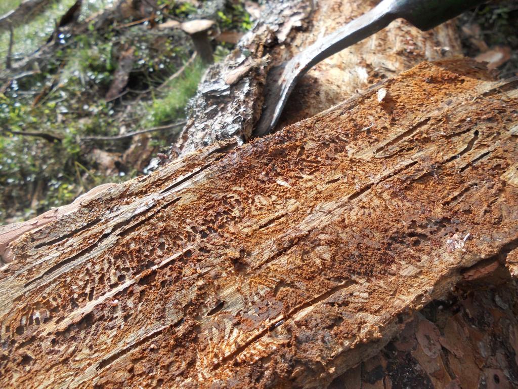 Bergwaldprojekt [das]; Umweltbaustelle [die]; Teil 7