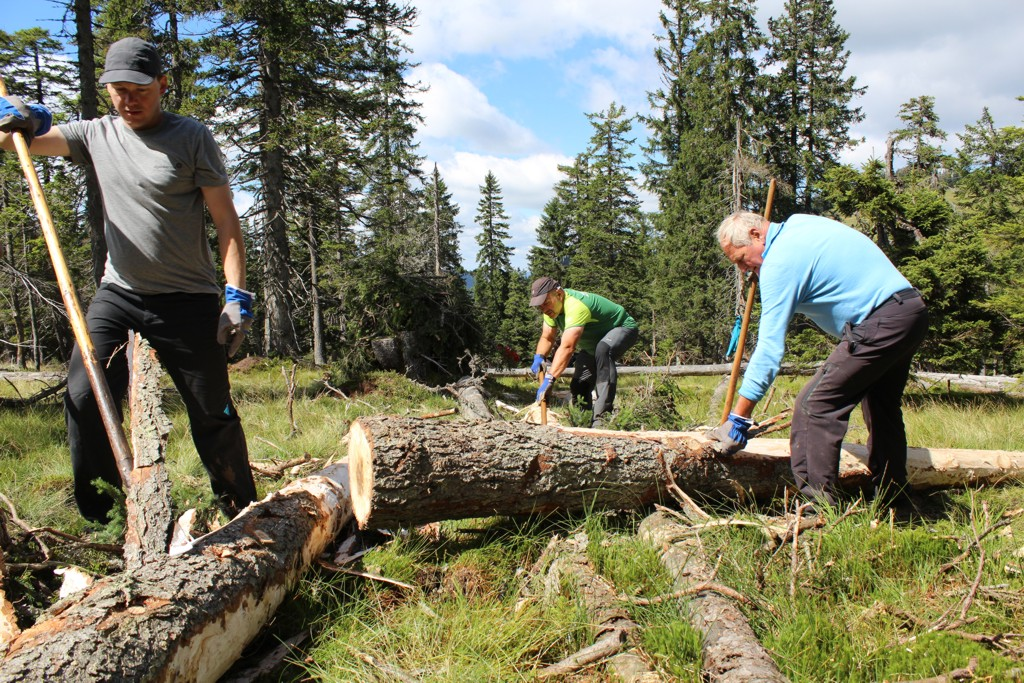Bergwaldprojekt [das]; Umweltbaustelle [die]; Teil 1