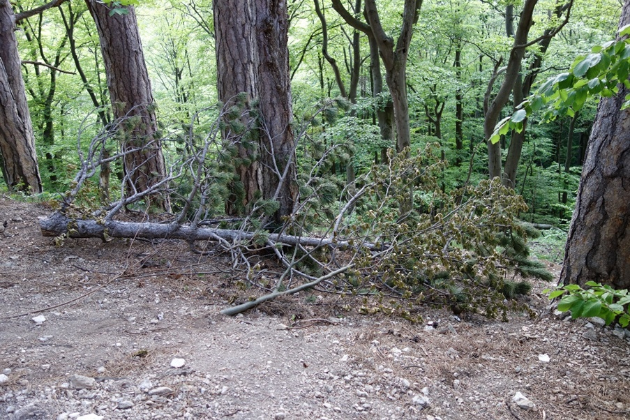 Vandalismus – ein Kletterthema?