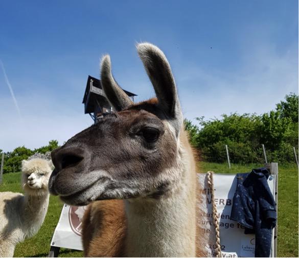 Familien Spezial: Wandern mit Lamas