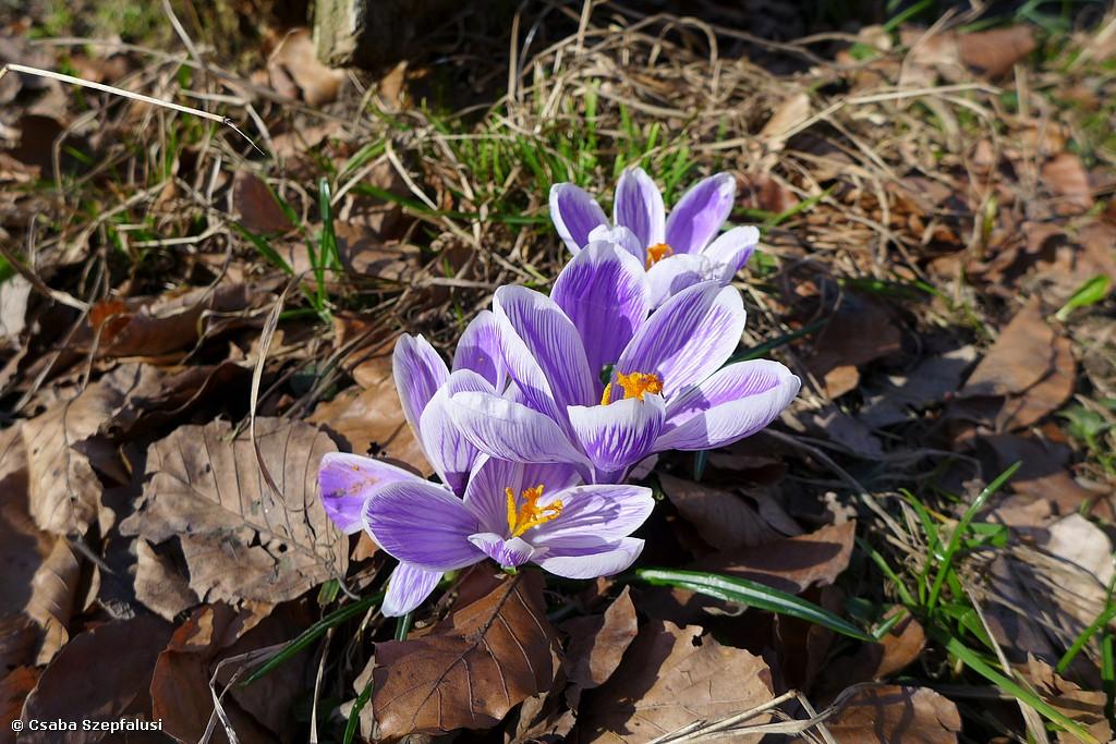 NEU: Edelweiss Natur: Alpine Ökologie 1