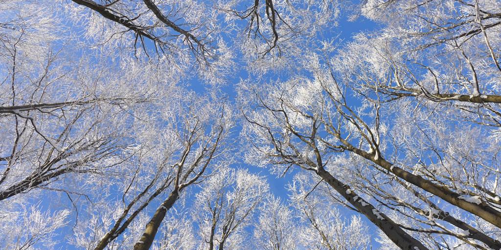 Winterwandern im Wienerwald